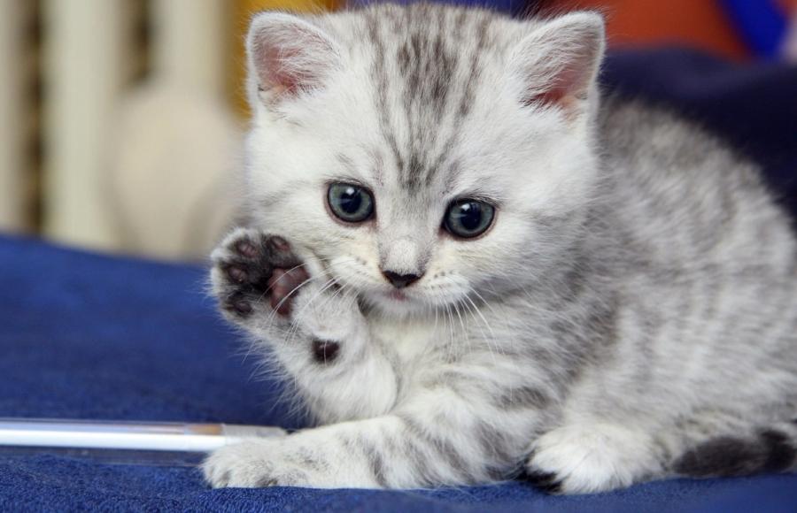 Cute kitten waving goodbye. Thanks to http://briff.me/2015/01/02/animals-waving-goodbye/